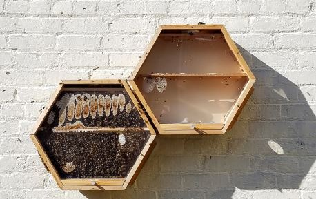 0_Clift-Hotel-BEEcosystem-hive-2.jpg